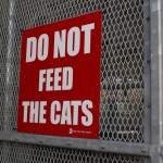 """Do not feed the cats"" sign"